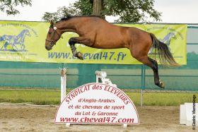 Chevaux A vendre Scarface du Fleuve Z